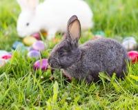 Coelhinhos da Páscoa Fotografia de Stock
