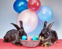 Coelhinhos da Páscoa sob balões Foto de Stock Royalty Free