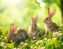 Coelhinhos da Páscoa pequenos Fotografia de Stock