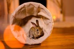 coelho agradável e atento em uma cesta pequena fotografia de stock