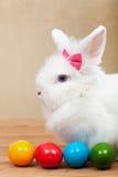 Coelho bonito com ovos da páscoa coloridos Fotos de Stock Royalty Free