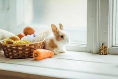 Coelho bonito da Páscoa que senta-se no peitoril da janela com a cesta de ovos e de cenouras coloridos Foto de Stock