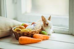 Coelho bonito da Páscoa que senta-se no peitoril da janela com a cesta de ovos e de cenouras coloridos Imagem de Stock