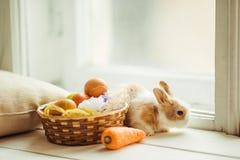 Coelho bonito da Páscoa que senta-se no peitoril da janela com a cesta de ovos e de cenouras coloridos Imagens de Stock