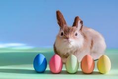 Coelho bonito e ovos da páscoa Fotografia de Stock