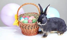 Coelho bonito perto da cesta da Páscoa decorada com balões Imagens de Stock
