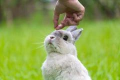 Coelho bonito que aspira a mão no parque foto de stock