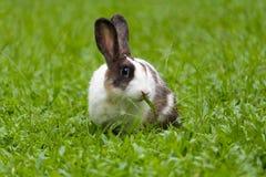 Coelho bonito que come a grama no parque imagens de stock