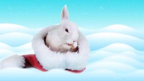 Coelho bonito que lava suas cara e orelha no chapéu de Santa Claus vídeos de arquivo