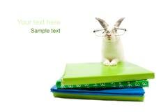 Coelho branco com vidros e schoolbooks Fotografia de Stock