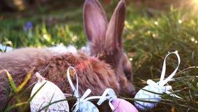 Coelho branco da Páscoa com os ovos da páscoa que sentam-se na grama vídeos de arquivo