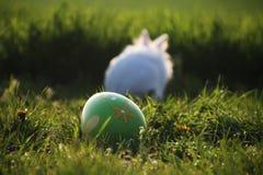 Coelho branco da Páscoa na grama verde Fotografia de Stock Royalty Free