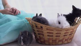 Coelho branco decorativo pequeno que senta-se na cesta A celebração da Páscoa vídeos de arquivo