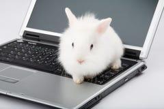 Coelho branco do bebê no portátil Imagens de Stock