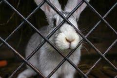 Coelho branco em uma gaiola Foto de Stock Royalty Free
