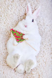 Coelho branco isolado no branco que guarda um pirulito na forma de árvores de Natal imagens de stock