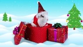 Coelho branco macio no traje de Santa Claus na caixa atual vídeos de arquivo