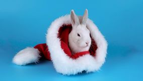 Coelho branco macio que senta-se e que aspira em um chapéu de Santa video estoque
