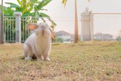Coelho branco na grama Imagem de Stock Royalty Free