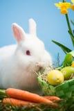 Coelho branco que senta-se ao lado dos ovos da páscoa na cesta e no carro verdes Imagem de Stock