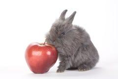 Coelho cinzento e uma maçã vermelha, isolada Imagens de Stock Royalty Free