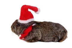 Coelho cinzento vestido como Santa Fotografia de Stock Royalty Free