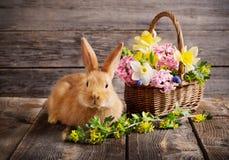 coelho com flores da mola Imagens de Stock Royalty Free