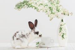 coelho com flores da mola Fotografia de Stock Royalty Free