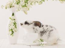 coelho com flores da mola Imagem de Stock Royalty Free
