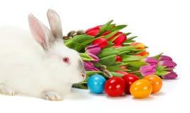 Coelho da Páscoa e ovos coloridos Foto de Stock Royalty Free