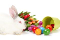 Coelho da Páscoa e ovos coloridos Imagem de Stock