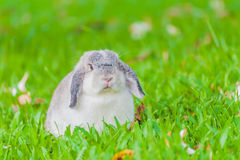 Coelho de coelho no jardim Foto de Stock