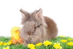 Coelho de Easter Fotos de Stock Royalty Free