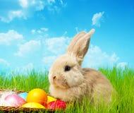 Coelho de Easter imagem de stock royalty free