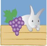 Coelho de Easter Fotografia de Stock
