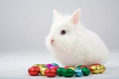 Coelho de easter branco com ovos de chocolate Fotos de Stock Royalty Free