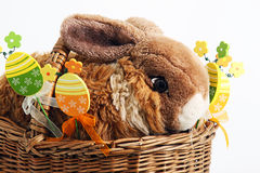 Coelho de Easter Fotos de Stock
