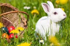 Coelho de Easter com os ovos na cesta Fotografia de Stock