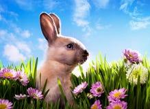 Coelho de Easter do bebê da arte na grama verde da mola Fotografia de Stock