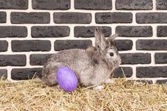 Coelho de Easter e ovo pintado fotografia de stock
