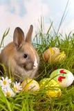 Coelho de Easter e ovos pintados Imagens de Stock