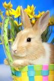 Coelho de Easter e tulips amarelos Imagem de Stock Royalty Free