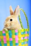 Coelho de Easter em uma cesta fotos de stock royalty free