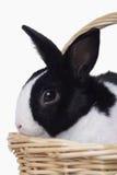 Coelho de Easter na cesta fotografia de stock