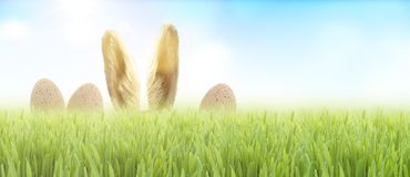 Coelho de Easter na grama foto de stock royalty free