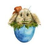 Coelho de Easter no ovo Isolado watercolor Imagens de Stock Royalty Free