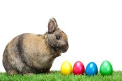 Coelho de Easter no prado com os ovos de Easter coloridos Imagem de Stock Royalty Free