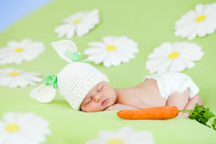Coelho do bebê do sono e alimento natural da cenoura Imagem de Stock