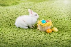 Coelho e ovos da páscoa pequenos engraçados Fotografia de Stock