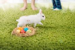 Coelho e ovos da páscoa pequenos engraçados Imagens de Stock Royalty Free